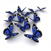 butterfly-پروانه (73)