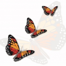 butterfly-پروانه (74)