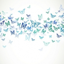 butterfly-پروانه (76)