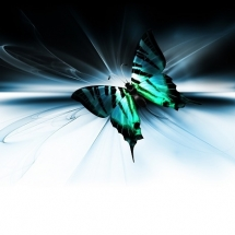 butterfly-پروانه (85)