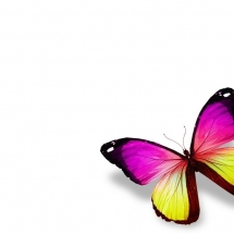 butterfly-پروانه (9)