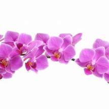 flower-گل (1)
