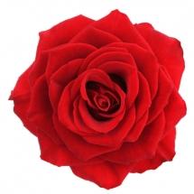flower-گل (10)