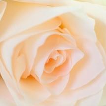 flower-گل (101)