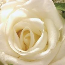 flower-گل (103)