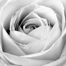 flower-گل (106)