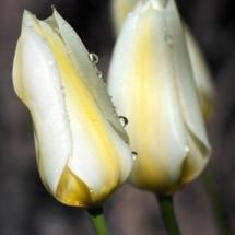 flower-گل (107)