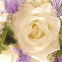 flower-گل (108)
