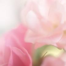 flower-گل (110)