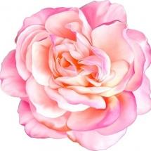 flower-گل (111)