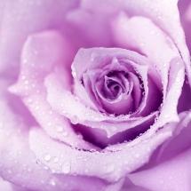 flower-گل (112)