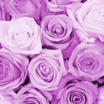 flower-گل (113)