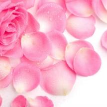 flower-گل (117)