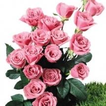 flower-گل (118)