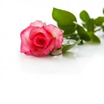 flower-گل (119)