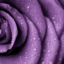 flower-گل (12)