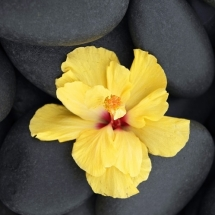 flower-گل (120)