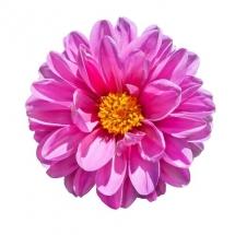flower-گل (122)