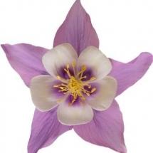 flower-گل (123)