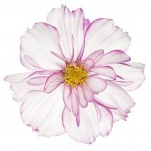 flower-گل (124)