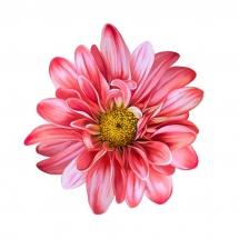 flower-گل (125)