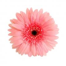 flower-گل (126)