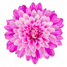flower-گل (128)