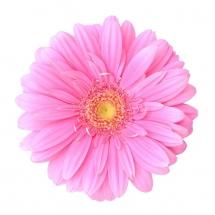 flower-گل (129)