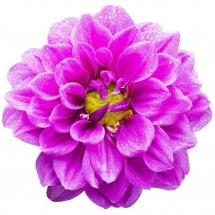 flower-گل (130)