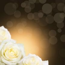 flower-گل (131)