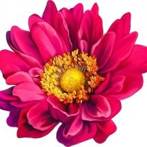 flower-گل (132)