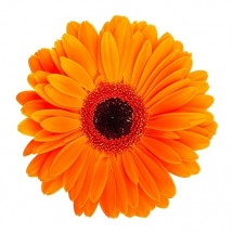 flower-گل (133)