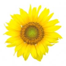 flower-گل (134)