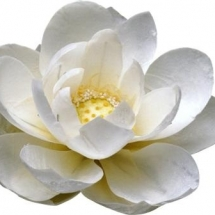flower-گل (135)