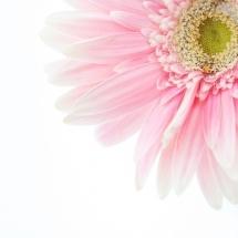 flower-گل (136)