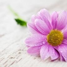 flower-گل (137)