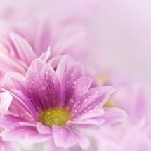 flower-گل (138)