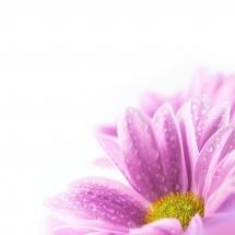flower-گل (139)