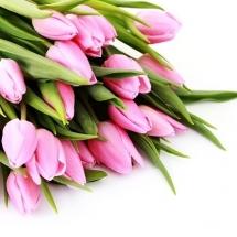 flower-گل (14)