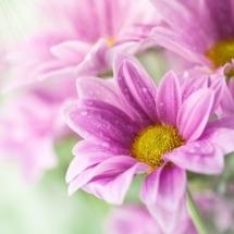 flower-گل (140)