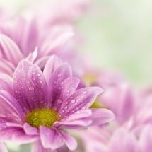 flower-گل (141)