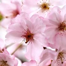 flower-گل (143)