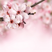 flower-گل (144)