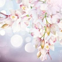 flower-گل (145)