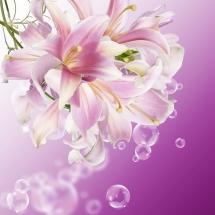 flower-گل (146)