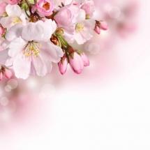 flower-گل (148)