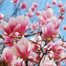 flower-گل (15)
