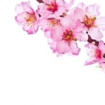 flower-گل (150)