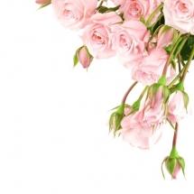 flower-گل (151)