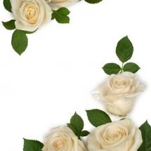 flower-گل (152)